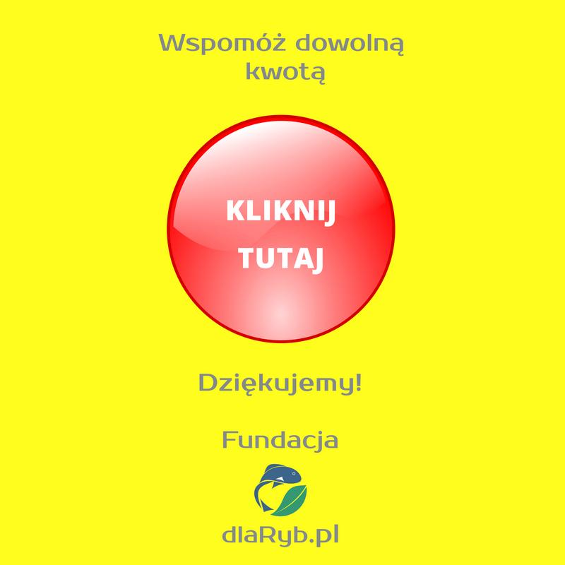klikacz2a.png