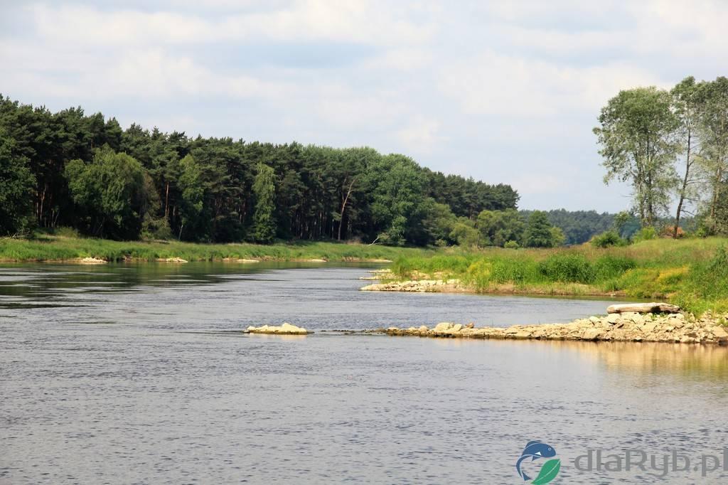 Rzeka Warta latem