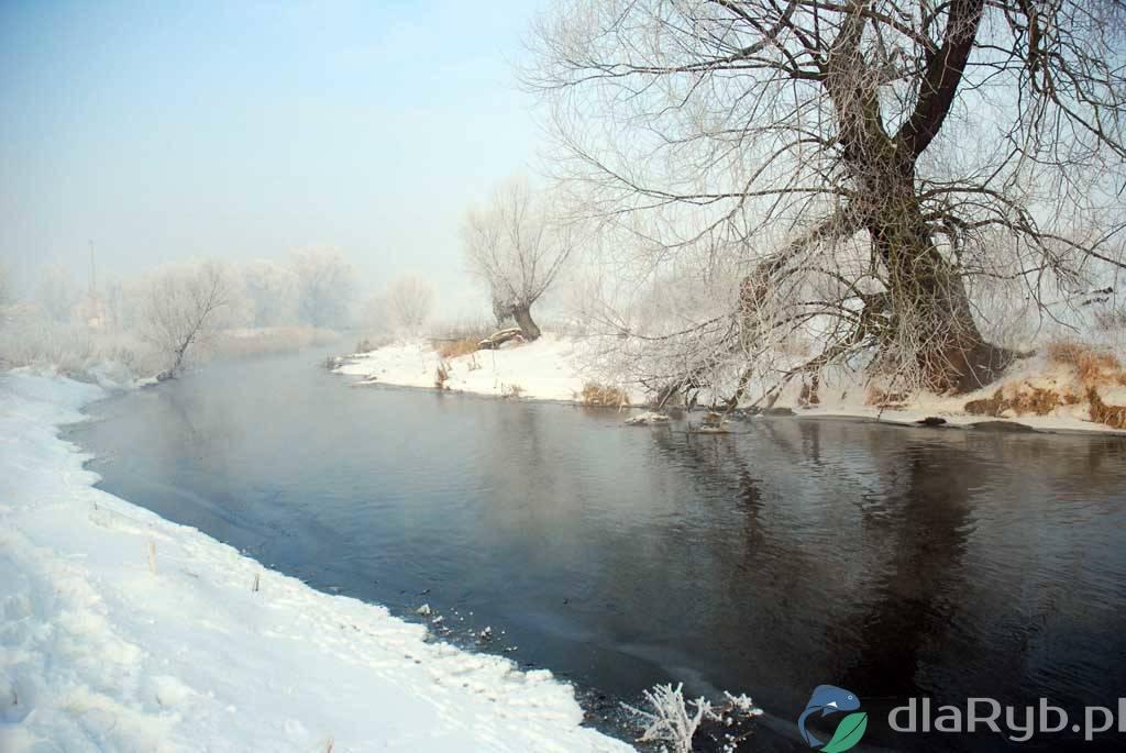 Rzeka Wełna